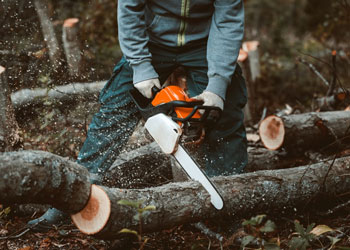 Best Budget Chainsaws Under $200