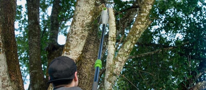 ordless Pole Saw